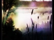 Misty morning brushes