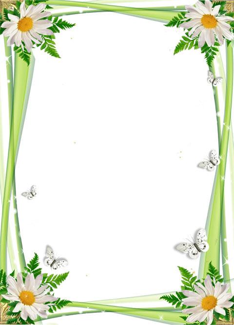 Chamomile flowers photo frame