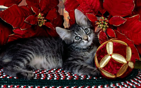 Kitty Christmas wallpaper